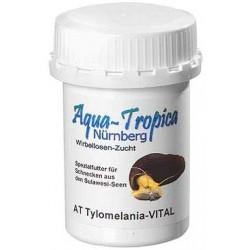 Tropical  Tylomelania-vital snail food- 35g