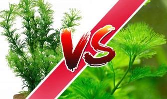 Élő növény vagyműnövény(előnyök és hátrányok)