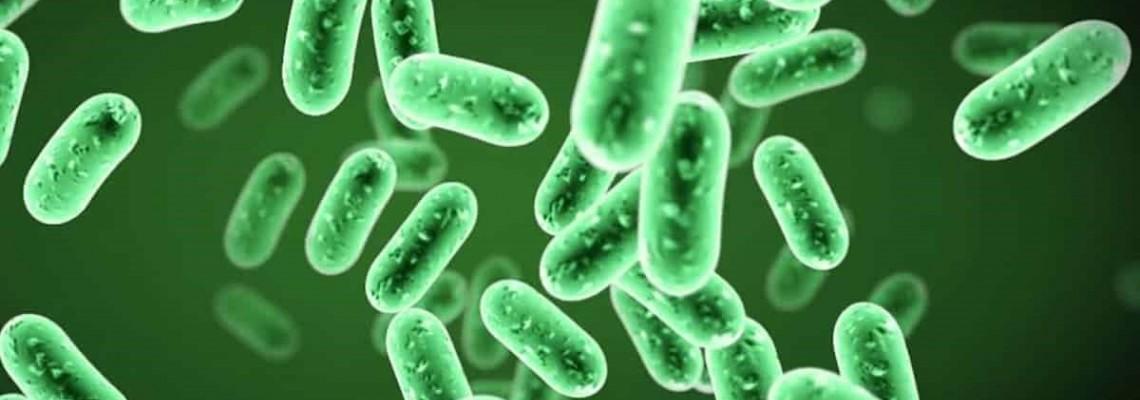 Minden a jótékony baktériumokról az akváriumokban