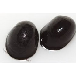 Csiga-Rohamsisak csiga (Neritina pulligera) XL.